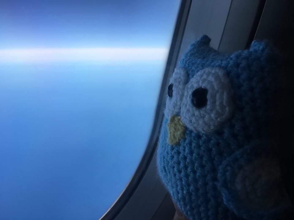 Wobby schaut aus dem Flugzeug